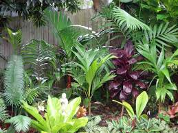Small Picture 100 best Going troppo images on Pinterest Landscaping Tropical