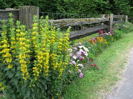 cottage summer flowering garden stone this  garden this