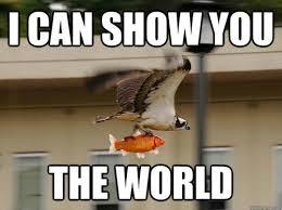 Memes Vault Best Animal Memes Of All Time via Relatably.com