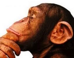 Resultado de imagem para imagem macaca na natureza