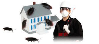 قمة الامتياز لمكافحة الحشرات بالقطيف