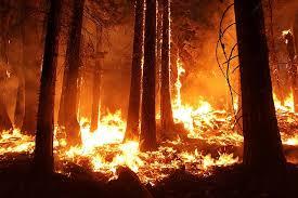 Prévention risque incendie prolongation jusqu'au 15 novembre et vigilance sécheresse - Biot