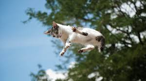 Is this a <b>dead</b>-<b>cat</b> bounce or the bottom investors have been waiting ...