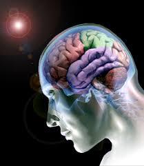 Resultado de imagem para neurobiologia das emoções