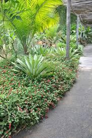 <b>Plants Tropical</b> foliage