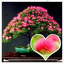 20 шт./пакет цветок альбизии flores, albizia <b>растения</b>, дерево ...