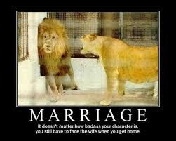 procgamusti: funny divorce quotes