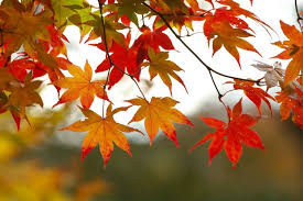 Image result for leaves changing colors