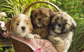 Image result for puppies cute