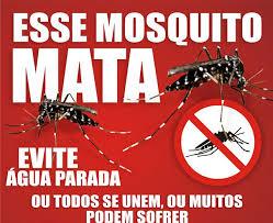 Resultado de imagem para dengue