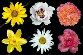 Mix collage of flowers: <b>white peony</b>, red and rose roses, <b>yellow</b> ...