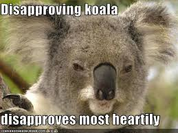 Funny koala meme collection (9 pictures)   Animal Space via Relatably.com