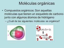 Resultado de imagen de Las moléculas orgánicas