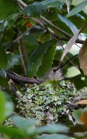 Nesting Season, or When is it safe to Trim <b>Trees</b>? | Madrone ...