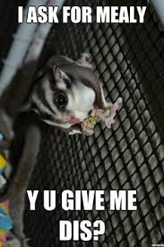 Sugar sugar on Pinterest | Sugar Gliders, Gliders and Sugar Glider ... via Relatably.com