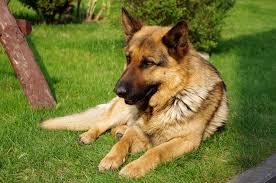 Warriors: Dog Version. Images?q=tbn:ANd9GcTpaUD_eAs4L9p0g2CVo9hU4hu3gFfV3WNSd7_ZL3soHGimHaSPJQ