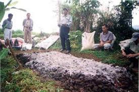 Cara Membuat Pupuk Kompos Kotoran Jangkrik Dengan Mudah