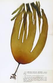Deep-sea tangles