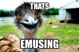 funny-animal-meme-puns | Funnies | Pinterest | Animal Puns, Funny ... via Relatably.com
