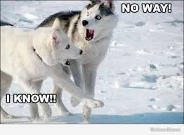 Husky Memes pt1 (10 pics) - Page 6 of 10 - Husky Lovers via Relatably.com