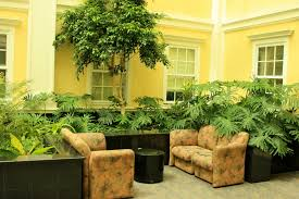 blog interior office plants part 14 having problems of a bare space inside your house are amazing office plants
