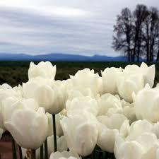 أجمل الزهور images?q=tbn:ANd9GcT
