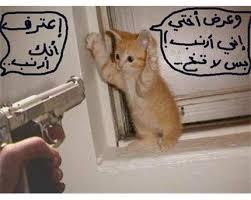صور مضحكه للحيوانات images?q=tbn:ANd9GcT