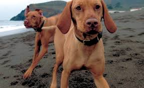 Image result for Dogs on GGNRA land pictures