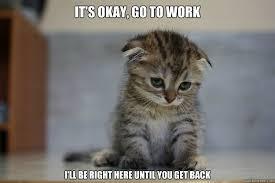 12 Very Sad Kittens That Never Quite Became A Meme via Relatably.com