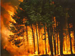 Images & Illustrations of bushfire
