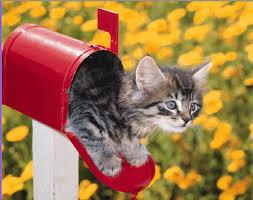 """Résultat de recherche d'images pour """"images gifs petits chats rigolos"""""""