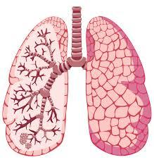 Znalezione obrazy dla zapytania asthma