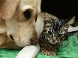 Image result for dog adoption tips