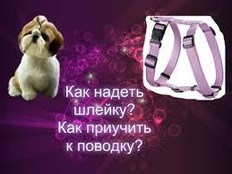 Как надеть <b>шлейку</b> на <b>собаку</b> и как приучить <b>собаку</b> к поводку ...