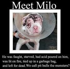 Caim Animal Rescue Network: Meet Milo