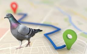 Local SEO: Google's Pigeon & doorway pages