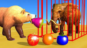 Wrong Fruits Colors Drop on Road for <b>Animals</b> and Cages <b>Cartoon</b> ...