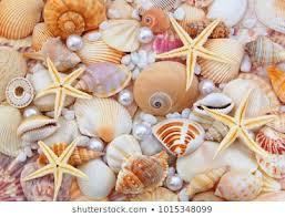 <b>Pearl Starfish</b> Images, Stock Photos & Vectors | Shutterstock