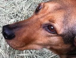 Μπορούμε να ελπίζουμε! Σκύλοι εκπαιδεύονται για να εντοπίζουν δηλητηριασμένα δολώματα...