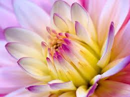 Flower Wallpapers  Images?q=tbn:ANd9GcTryyRreLeqX9HhuxNbaQZm3FD8wq6_nuYskM6VmgjRJ5m87qXUBQ