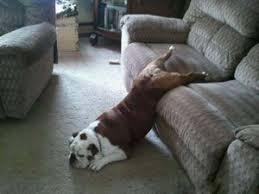 Αποτέλεσμα εικόνας για σκυλος στο σπιτι
