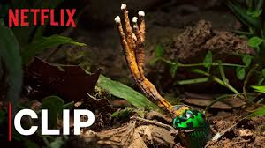 Our Planet | <b>Fungus</b> | Clip | Netflix - YouTube