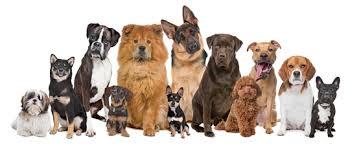 ancol dog harness reviews