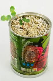 <b>растение bontiland</b> бальзамин 410503 | novaya-rossia-konkurs.ru