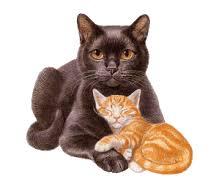 Hasil gambar untuk gambar animasi kucing