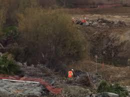 land clearing california tree service various job sites 0773