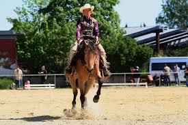 15. Western Horse Meeting Königslutter --- Reining LK3 - Bild ... - 15-western-horse-meeting-koenigslutter-reining-lk3-4824f15b-0a1a-4b29-b48f-d08491535b0c