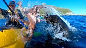 Seal slaps <b>man</b> with <b>octopus</b> in NZ - BBC News