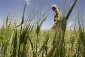 Agriculture: La bonne moisson !