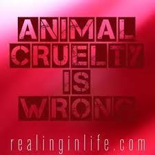 help me write a persuasive essay on animal cruelty cake writers  a persuasive essay on animal cruelty